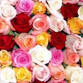 Spalvotos rožės