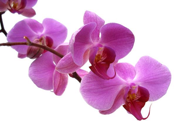 20 faktu apie orchidejas
