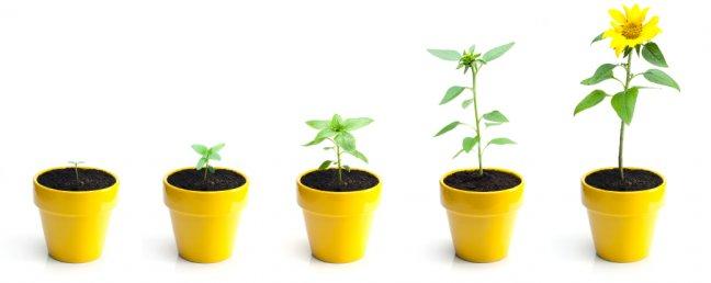 geliu auginimas