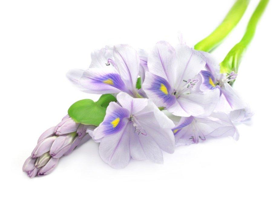 Papuoškite balkoną ar terasą įvairiaspalvėmis gėlėmis