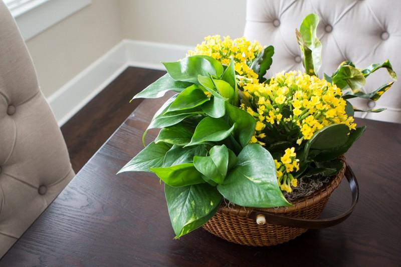 Pavasaris tinkamiausias metas persodinti gėles