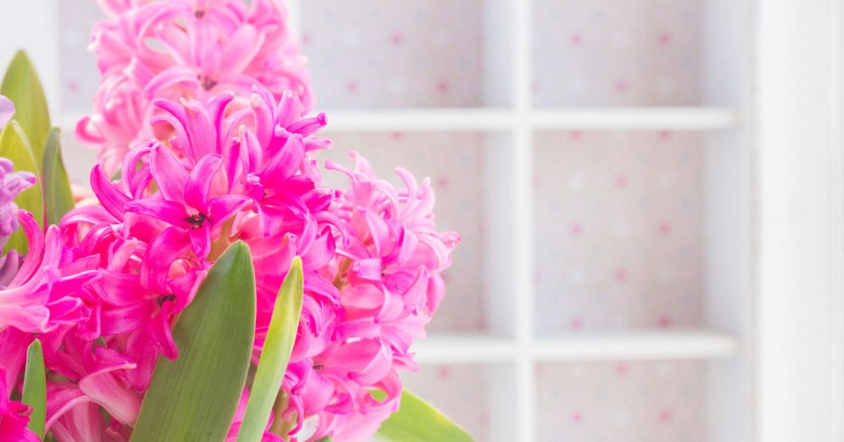 geles hiacintai